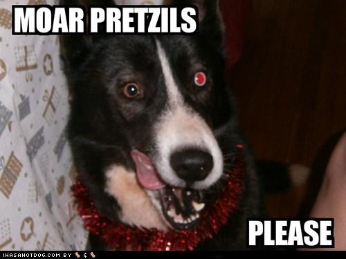 dogs,eating,food,i has a hotdog,more,pretzels