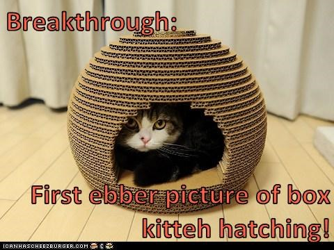 Breakthrough:  First ebber picture of box kitteh hatching!
