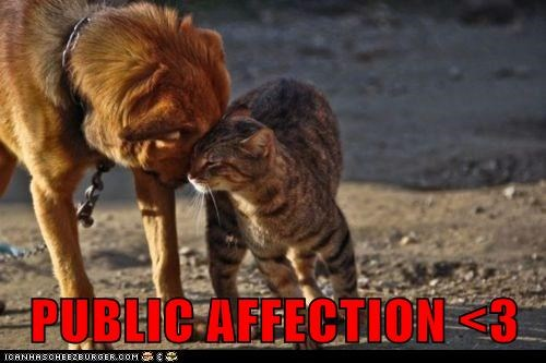 PUBLIC AFFECTION <3