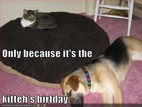 Only because it's the kitteh's birfday.