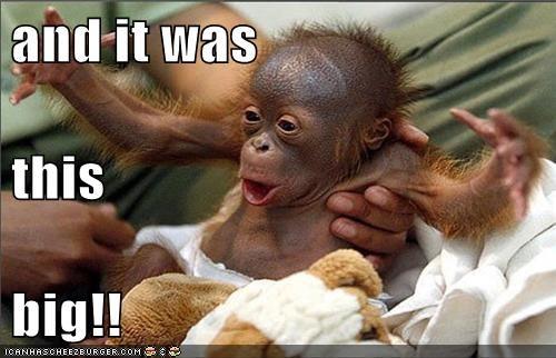 adorable,animals,ape,baby animals,orangutan
