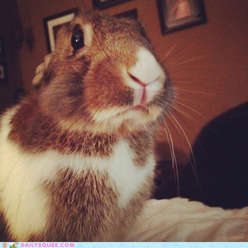 Reader Squees: Photogenic Bunbun