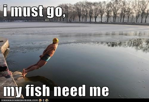 i must go,   my fish need me