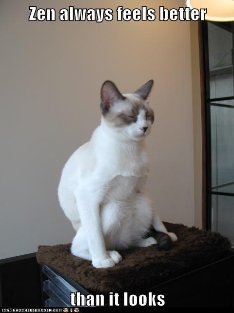 always,better,caption,captioned,cat,comparison,feels,looks,meditating,meditation,zen