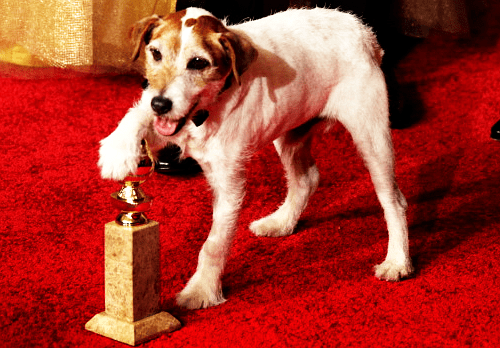 Golden Globes: Uggie Wins