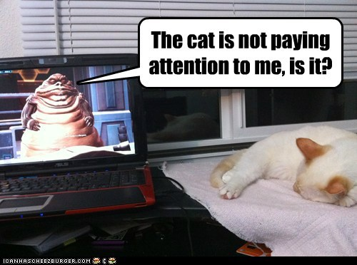 Cats always do this