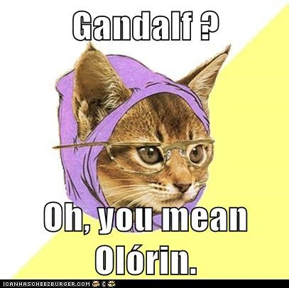 Animal Memes: Hipster Kitty - I Only Read It in the Original Elvish