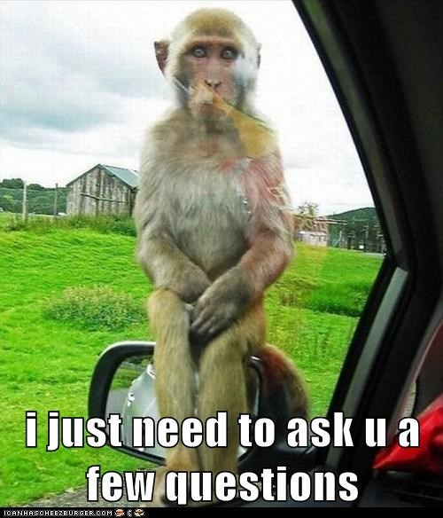 animals,car,i have some questions,monkey,official,questions,sitting,wtf