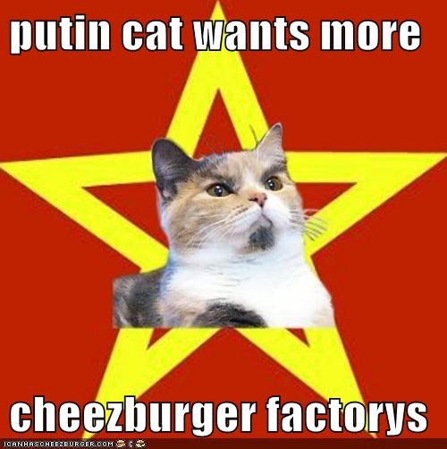 putin cat wants more  cheezburger factorys