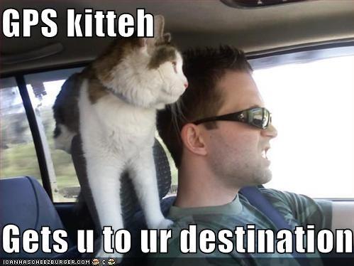cars,driving,gps,hoomans,humans,lolcats,sunglasses