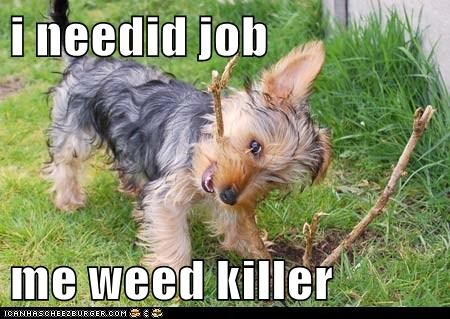 i needid job   me weed killer