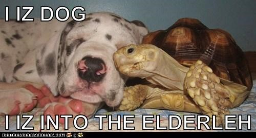 I IZ DOG  I IZ INTO THE ELDERLEH