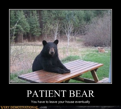 animals,leave,patient bear,Terrifying