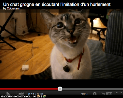 Around the Interwebs: Kitty Cat Call and Response (VIDEO)
