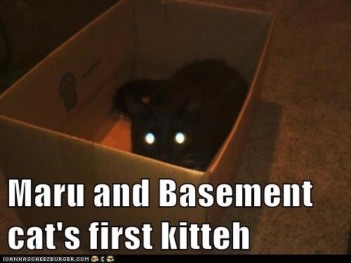 Maru and Basement cat's first kitteh