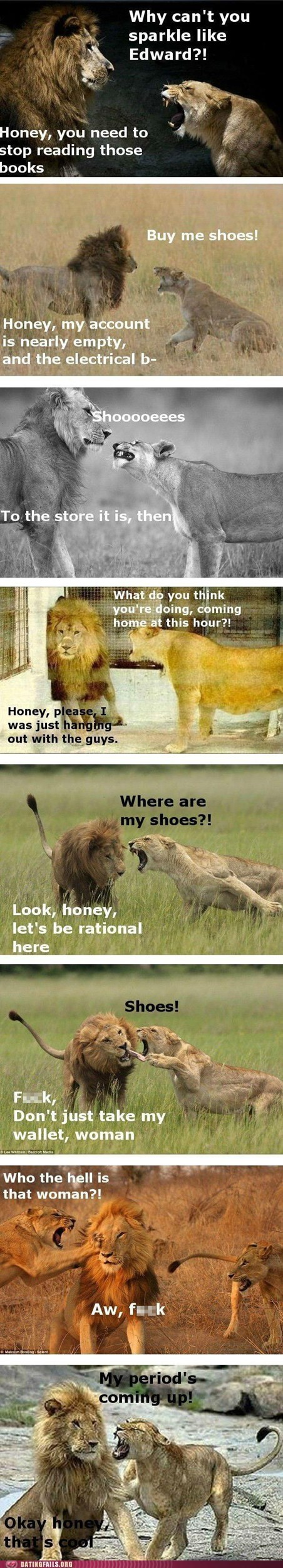 animals,Cats,controlling,dating,lions,relationships,shoes