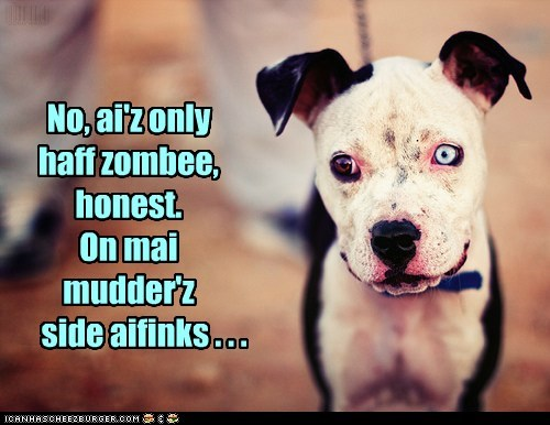 adorable,best of the week,eyes,Hall of Fame,heterochromia,pitbull,puppy,sweet face,zombie