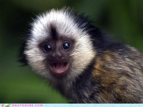 baby,big,happy,lyrics,monkey,parody,rewrite,smile,song,tamarin,wide