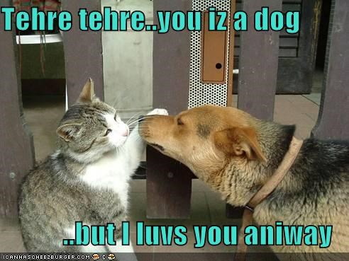 Tehre tehre..you iz a dog  ..but I luvs you aniway
