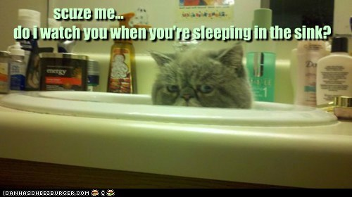 caption,captioned,cat,do not want,excuse me,grumpy,question,sink,sleeping,unhappy,upset,watch,when,you