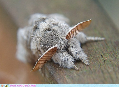 Creepicute: Like a Moth to Fluff