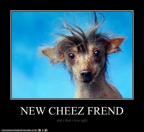 NEW CHEEZ FREND