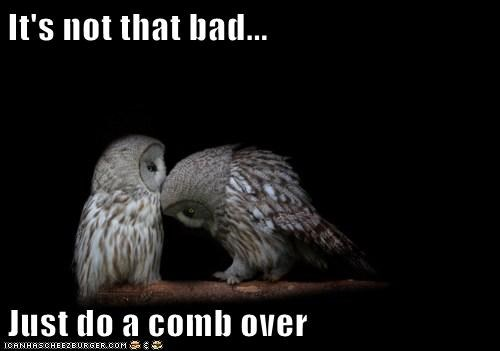 advice,bad,caption,captioned,comb over,do,not,Owl,owls,suggestion