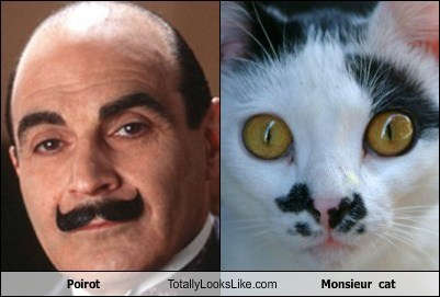 Poirot Totally Looks Like Monsieur  cat