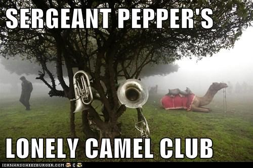 SERGEANT PEPPER'S  LONELY CAMEL CLUB