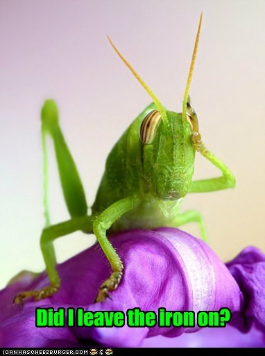 animals,did i leave the iron on,grasshopper,insect,iron