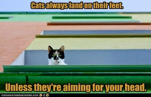 Cats always land on their feet.