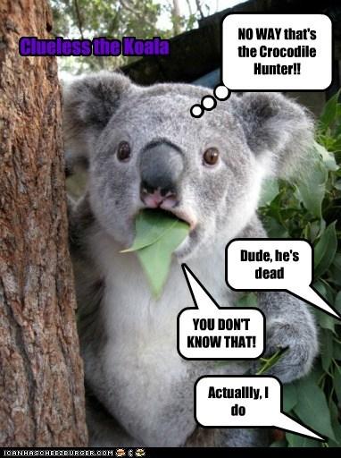 Clueless the Koala #1