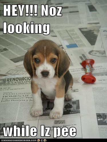 HEY!!! Noz looking  while Iz pee