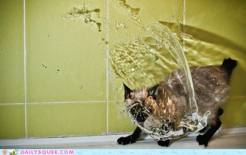 acting like animals,cat,do not want,never,resisting,shower,water