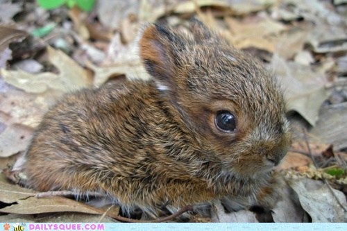 baby,bunny,Hall of Fame,happy bunday,hopping,jumping,leaf,leaves,pile,playing,rabbit