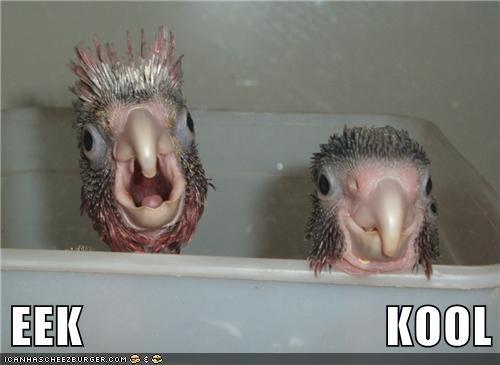 animals,baby birds,birds,cool,eek,reactions