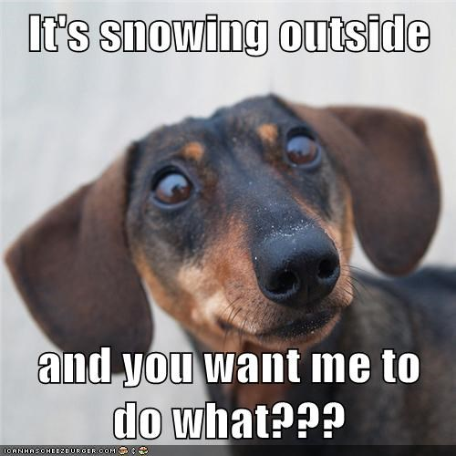 It's snowing outside  and you want me to do what???
