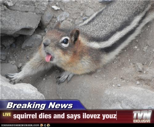 Breaking News - squirrel dies and says ilovez youz