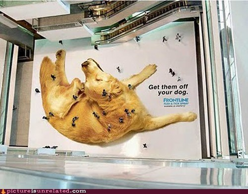 Advertisement Says: You Are The Flea People