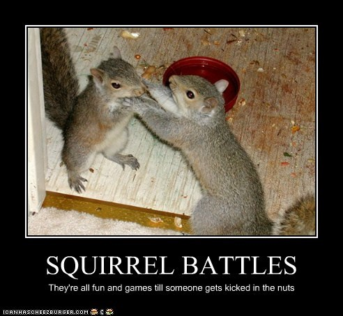 SQUIRREL BATTLES