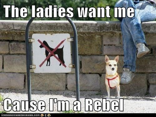 The ladies want me  Cause I'm a Rebel