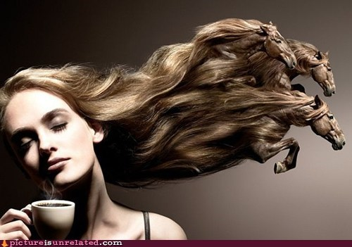 Head & Shoulders & Horses & Coffee