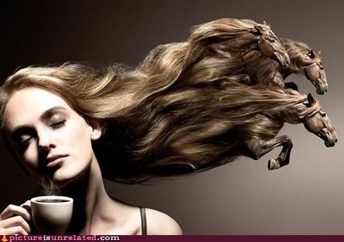 Head & Shoulders & Horses & Coffee