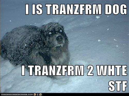 I IS TRANZFRM DOG  I TRANZFRM 2 WHTE STF