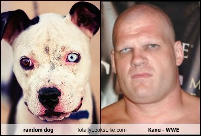 random dog Totally Looks Like Kane - WWE