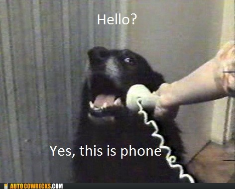 hello,who was phone,yes this is dog