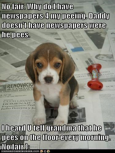 No fair. Why do I have newspapers 4 my peeing. Daddy doesn't have newspapers were he pees.   I heard U tell grandma that he pees on the floor every morning. No fair ):