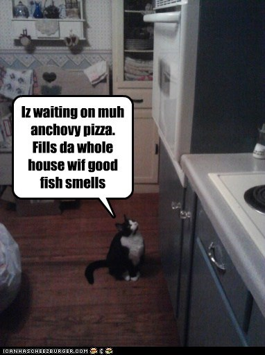 Iz waiting on muh anchovy pizza. Fills da whole house wif good fish smells