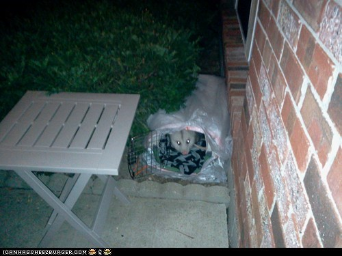 """the """"feral cat"""" i'm caring for"""