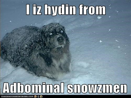 abominable snowman,australian shepherd,hide,hiding,outdoors,snow,winter